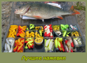 наживка для рыбалки