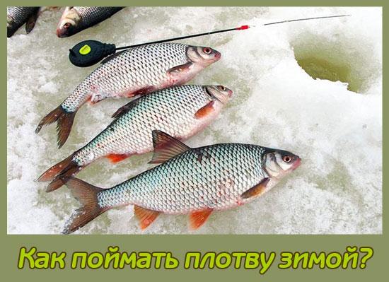 снасть для ловли плотвы зимой