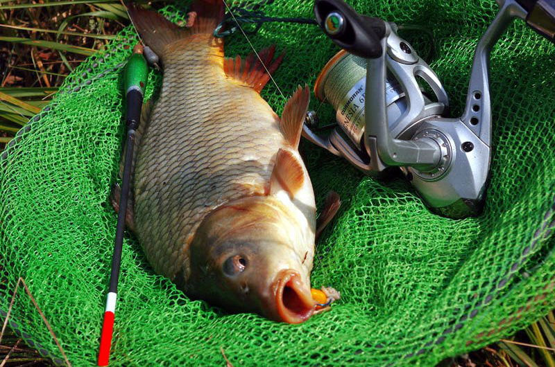как готовить на что ловить рыбу