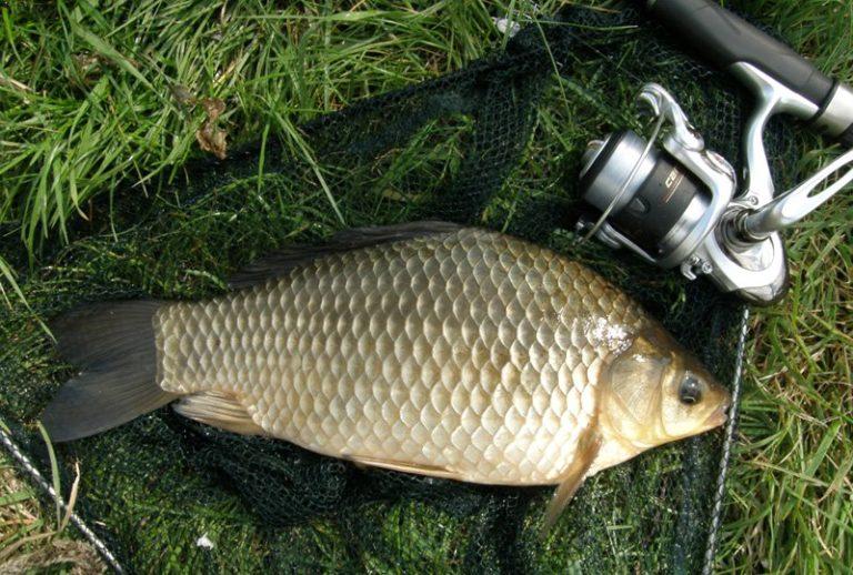 особенности рыбной ловли карася